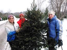 Christmas Tree Farms Albany Ny by O Christmas Tree Local Farms Work Year Round To Make Certain
