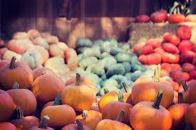 Sauvies Island Pumpkin Patch Corn Maze by Take Your Pick At Portland Pumpkin Patches Portland Living On