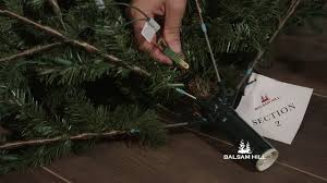 Section 2 Of A 3 Easy PlugTM Tree Does Not Light Up