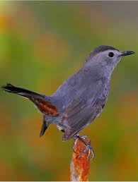 The State Of The Birds: FAQs | Smithsonian Insider Sibleys Backyard Birds Wings And Feathers Pinterest Bird Grow These Native Plants So Your Can Feast Audubon Winter Feeding Tips For Happy And Healthy Pics Florida Wild Co Watching De My Life In A Northern Town Cedar Waxwing Birds Utah Google Search Weve Seen The Butterflies Butterflies Of New England Yok David Feeding At My Father Nature Bird Feeder Jacksonville Serenity Spell Attracting Creating Habitat For Wildlife Barn