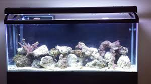 Is This Enough Live Rock For 55 Gallon Reef Tank? | REEF2REEF ... Aquarium Aquascaping Rocks Aquascape Designs Ideas Project Reef Rock 21 Dry Walt Smith Bulk Supply Review Real Generation 4 Digitalreefs News Info How To Live Purple Live Rock Youtube Updated Clear Pics Newbies Attempt At Aquascaping So Far 3reef Design Aquafishvietcom Bring Back The Wall News Builders Keeping Austin Club Walls For A Tank Callorecom River Suggestion Planted Forum