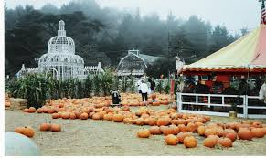 Half Moon Bay Pumpkin Patch 2017 by Top 10 Pumpkin Patches In The U S