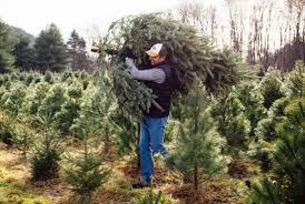 Christmas Tree Preservative Recipe Sugar by 10 Secrets Of Christmas Tree Farmers Mental Floss
