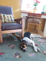 Do Black And Tan Coonhounds Shed by Cinnamon U0027s Blog Coon Hound Tales How Do You Know Your Dog Has