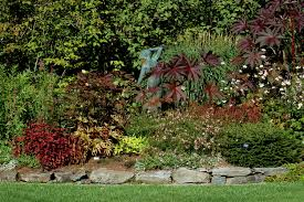 How To Landscape Your Property Lines | Shrub, Perennials And ... Best 25 Backyard Plants Ideas On Pinterest Garden Slug Slug For Around Pools But I Like Other Areas Tooexcept The Palm Beautiful Hedges Landscaping Leyland Cypress Landscape Placed As A Privacy Fence Trees Models Ideas Mixed Evergreen Tree Screen Conifers Please 22 Simply Beautiful Low Budget Screens For Your Landscape Design Bamboo Irrigation Blg Environmental Ficus Tuffi Hedge Specimen Tree Co Nz Gardens