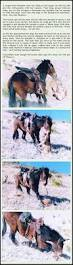 Mule Shed Mover Dealers by Adrianxxx777 George Stubbs Equus Es Pinterest Equine Art