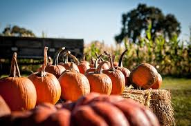 Best Pumpkin Patch Near Roseville Ca by Keema U0027s Pumpkin Farm