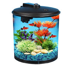 Types of home aquarium freshwater fish Walmart