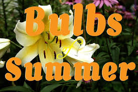summer blooming bulbs you should plant in your garden treehugger