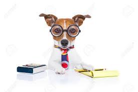 chien secrétaire comptable avec la calculatrice un