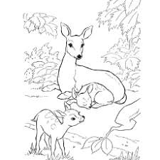Hog Deer With Babies Black Buck Printable To Color