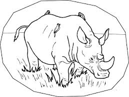 Full Image For Free Baby Zoo Animal Coloring Pages Wild Rhino