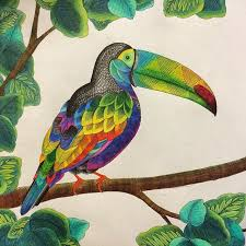 Inspiration Toucan Animal Coloring Pages Coloringforadults Colouringforadults ColoringforadultsToucan AnimalRegnul AnimalColouring