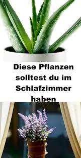 diese pflanzen solltest du im schlafzimmer haben pflanzen