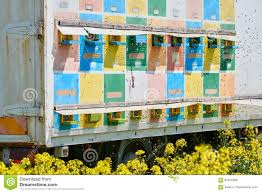 Truck With Bee Hives In A Field Stock Photo - Image Of Natural ... Arnia Hive Monitors On Twitter Apimondia2017 Tech Tour Bee Lorry Bee Busters Truck Moving Bees Is Not Easy Slide Ridge Notes Video Driver Cited In Truck Crash 6abccom Brown Cat Bakery Transport Meet The Biobee Youtube Why Are So Many Trucks Tipping Over The Awl 14 Million Spilled I5 Everybodys Been Stung Honeybees Travel 1000 Miles To Pollinate Nations Crops Bbj Today 2018 Hino 817 4x4 Flat Deck