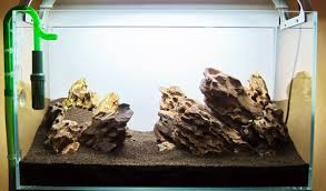 Best Substrate For Aquascaping Httpwwwaquariuesigngroupcomdataphotos Low Tech Tank Showandtell Low Tech Can Be Lush Too The Aquascaping Styles Aquariums Planted Aquarium And Fish Tanks 101 Best Small Size Images On Pinterest Aquarium Nature Style Aquascape Awards Best Substrate For Betta 268993 Concave Convex Triangular Rectangular Aquascapes Aquascapers With Plastic Plants Only _ Ideas 106 Fluval Edge Inspiration Ohko Stone Forum Art Theories Tips Keeping Basics Love