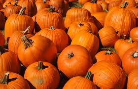 Pumpkin Patch Tulsa 2014 by Southern Hills Christian Church Pumpkin Patch Edmondsun Com