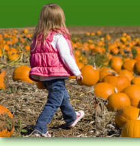 Michigan Pumpkin Patch Apple Orchard by Find Corn Mazes In Richland Michigan Gull Meadows Farms In