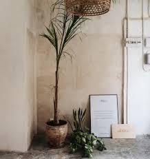 pflanzen für ein gutes raumklima mythos oder fakt