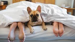 People Sleep More Soundly With Their Dogs in the Bedroom With