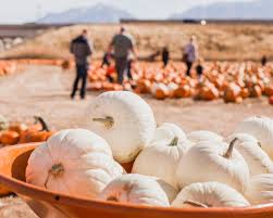 Pumpkin Patch Utah by Pumpkin Patch U2013 Petersen Family Farm