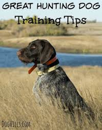 Great Hunting Dog Training Tips