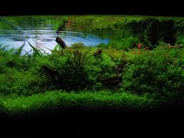 Ada Aquascaping Contest 2008 By Berkleyone On DeviantArt The Green Machine Aquascaping Shop Aquarium Plants Supplies Photo Collection Aquascape 219 Wallpaper F Amp 252r Of The Month October 2009 Little Hill Wallpapers Aquarium Beautify Your Home With Unique Designs Design Layout New Suitable Plants Aquariums Pinterest Pics Truly Inspired Kinds Ornamental Aquascaping Martino Agostini Timelapse Larbre En Mousse Hd Youtube Beauty Of Inside Water Garden Inspirationseekcom Grass Flowers Beautiful Background