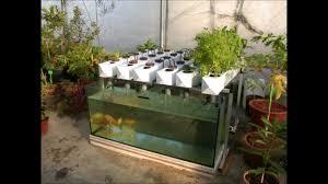 Build Aquaponics Garden