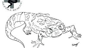 Gecko Coloring Page Pages Collections For Kids Leopard Sheets Mobile