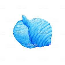 100 Sea Shell Design Illustrations Of Blue S Marine Hand Drawn Watercolor