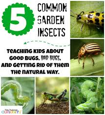 Teaching Children About Garden Bugs {and Natural Pesticide Recipes ... How To Keep Mosquitoes Away Geting Rid Of Five Tips For Getting Bugs And Pests On Your Patio Youtube To Get Chiggers Skin Body Yard Symptoms Fast Crawly Catures In My Backyard Alberta Home Gardening 25 Unique Rid Spiders Ideas Pinterest Kill Off Bug Control I Repellent Spiders Spider Spray Sprays Cutter 16 Oz Outdoor Foggerhg957044 The Of Time Tested Bob Vila Pictures With Japanese Beetles Garden Best Indoor Mosquito Killers Insect Cop