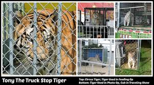 Petition | Free Tony The Tiger