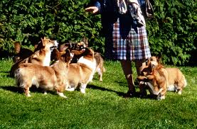 Big Dogs That Dont Shed Badly by Queen Elizabeth U0027s Corgis A History Vanity Fair