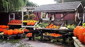 Best Pumpkin Apple Picking Long Island Ny by Pumpkin Carving Apple Picking Wine Tours And Spooky Ghost Walks