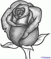 knumathise Rose Drawing