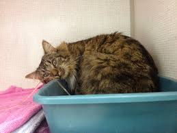 renal failure in cats exclusively cats veterinary hospital flooding the litterbox