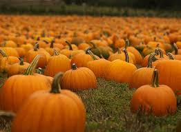 Pumpkin Patch In Homer Glen Illinois by Settle In To Fall With A Trip To Area Haunted House Pumpkin Patch