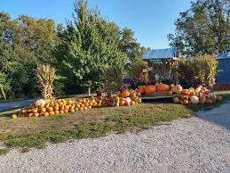 Pumpkin Farms In Belleville Illinois by Braeutigam Orchards Home Facebook
