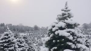 Elgin Il Christmas Tree Farm by Cut Down Your Own Christmas Tree Near Chicago