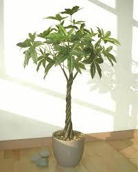 8ft Christmas Tree Ebay by Pachira Tree 3 8ft 1 15m Artificial Replica Silk Imitation