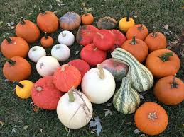 Pumpkin Patch Fayetteville Arkansas by Appel Farms Home Facebook