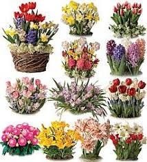 58 best flower gardens gifts images on flower