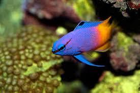 les poissons partie 1 récifal