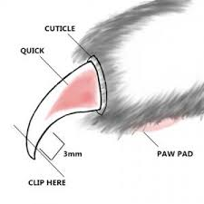 how to cut a cats nails how to trim a cat s nails lovetoknow