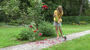 The Girl With Broom Sweeping Garden Path Covered With Red Rose ... Garden Eaging Picture Of Small Backyard Landscaping Decoration Best Elegant Front Path Ideas Uk Spectacular Designs River 25 Flagstone Path Ideas On Pinterest Lkway Define Pathyways Yard Landscape Design Ma Makeover Bbcoms House Design Housedesign Stone Outdoor Fniture Modern Diy On A Budget For How To Illuminate Your With Lighting Hgtv Garden Pea Gravel Decorative Rocks