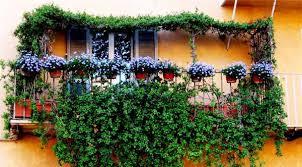Nice Greenery Flower Decor Of Small Open Balcony