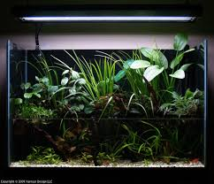 Aquascape Series | [T A G] September 2010 Aquascape Of The Month Sky Cliff Aquascaping How To Set Up A Planted Aquarium Design Desiging Tank Basic Forms Aqua Rebell Suitable Plants With Picture Home Mariapngt Nature With Hd Resolution 1300x851 Designs Unique Hardscape Ideas And Fnitures Tag Wallpapers Flowers Beautiful Garden Best 25 Aquascaping Ideas On Pinterest From Start To Finish By Greg Charlet