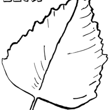 Leaf Coloring Pages To Download And Print