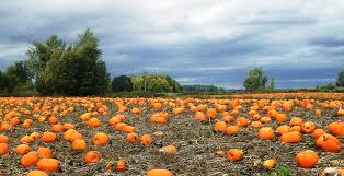 Seattle Pumpkin Patch by The Ultimate Guide To Northwest Pumpkin Patches Portland Monthly