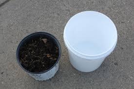 Natural Fertilizer For Pumpkins by 5 Natural Diy Fertilizers For Your Garden And Flowerbeds
